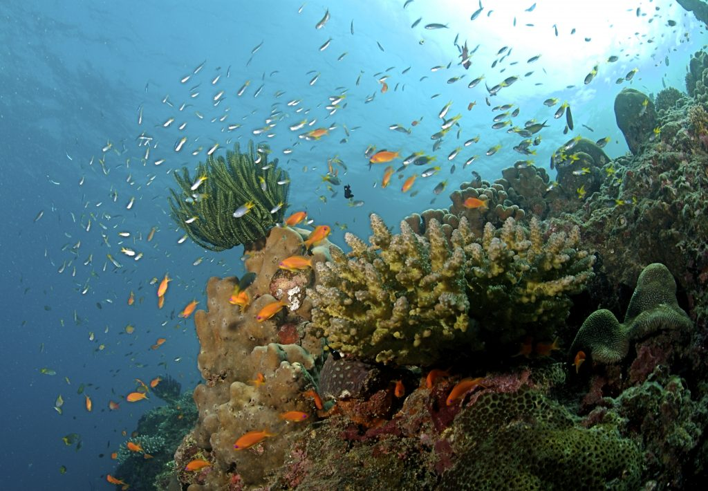 The_Coral_Reef_at_the_Andaman_Islands